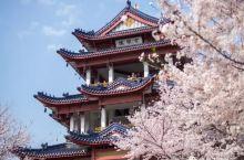 3月国内最美的地方,再不出发就辜负春天了!