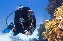 去海岛还在浮潜你就out了!走,我们去东南亚考潜水证!