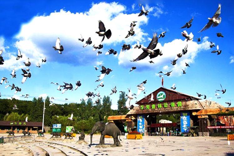 선양 야생동물원1