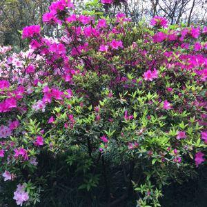 花卉园旅游景点攻略图