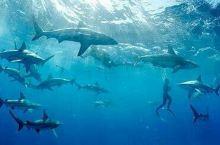人鲨共泳,惊险刺激