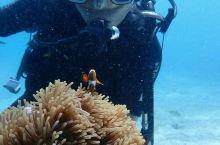 第一次感受潜水 海底一景 感觉良好 鱼风暴 整装待发 享受潜水