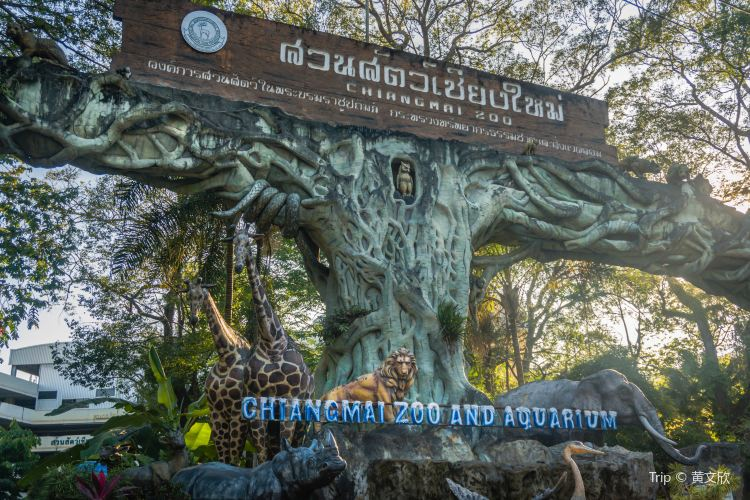 Chiangmai zoo1
