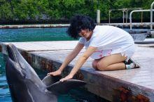 做一天海豚保育员 保护海洋是每个人的责任。在这里可以与这些可爱的小精灵们相处一整天,了解它们的沟通方
