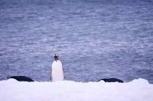 """哦 去南极 你必须知道的""""5米原则"""""""