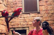详解奥兰多迪士尼之动物王国Animal Kingdom