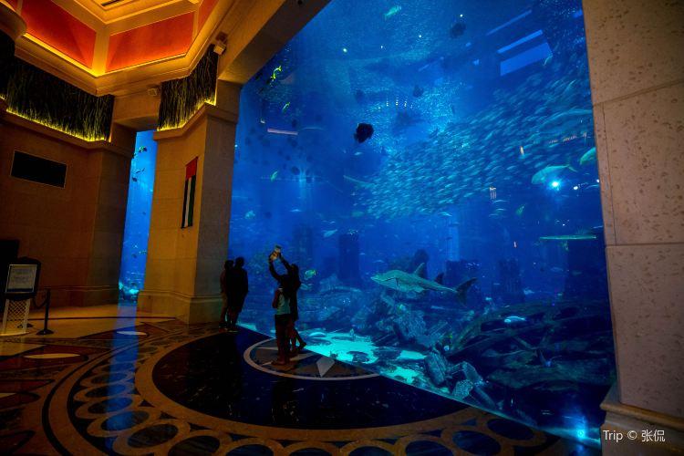 The Lost Chambers Aquarium1