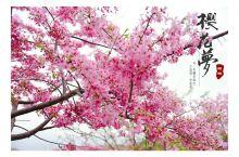 #勇敢说爱#不用去日本,永福的这片樱花园让你自拍停不下来