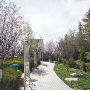 格桑花公园旅游景点攻略图