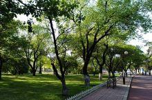 醉人的绿 五月五日,早骑共享单车到公园。微风徐徐,翠绿欲滴,景色美如画。同学提诗:物静人闲春色好,半