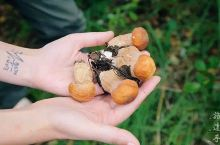 雨季的云南,一定要吃一次菌子,才不枉费这大自然的馈赠