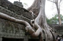 柬埔寨吴哥塔普伦寺