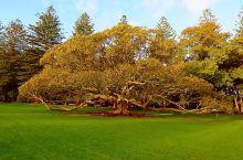 #瓜分10000元#奥克兰一树山公园