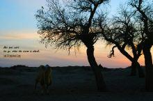 大漠胡杨,昭示着生命不会轻易终结的自然法则