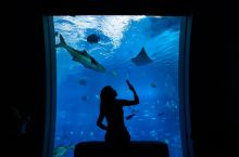 泡澡看鲨鱼,与神秘的水下世界零距离