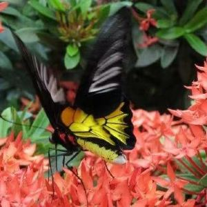 蝴蝶温室之旅旅游景点攻略图
