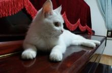 一只妖娆的猫咪