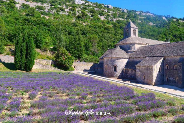 Abbaye Notre-Dame de Senanque4