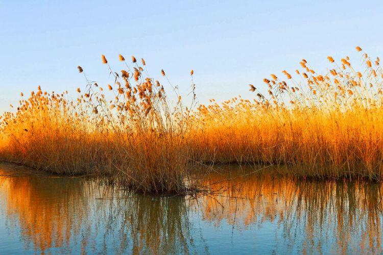 Gaoyou Lake Reed Wetland Park2