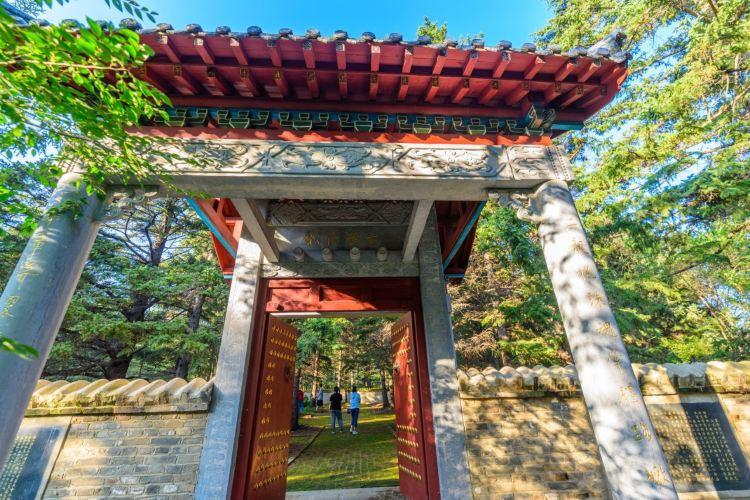 嫩江高峰森林公園