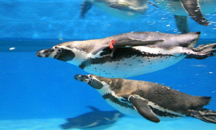 COEX水族館3