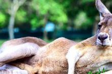"""想跟心爱的动物""""起腻""""?世界上这15个动物园给你惊喜"""