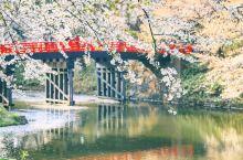 日本最浪漫的樱花季就要来了,第一波速报送到