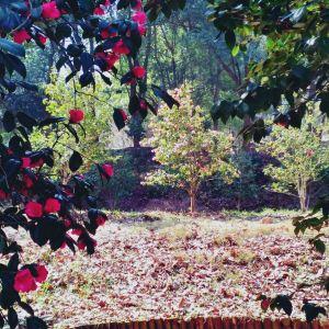 五脑山森林公园旅游景点攻略图