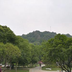 亭林园旅游景点攻略图