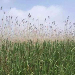紫海鹭缘浪漫爱情主题公园旅游景点攻略图