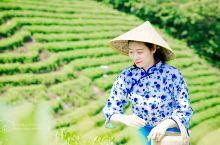 信阳|文新茶庄园,上茶山,采新鲜信阳毛尖