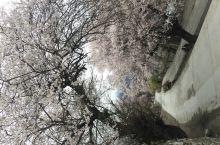 """川藏线4月初 12天自驾  林芝桃花""""途虽远,我必达!"""""""