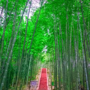赤水竹海公园旅游景点攻略图