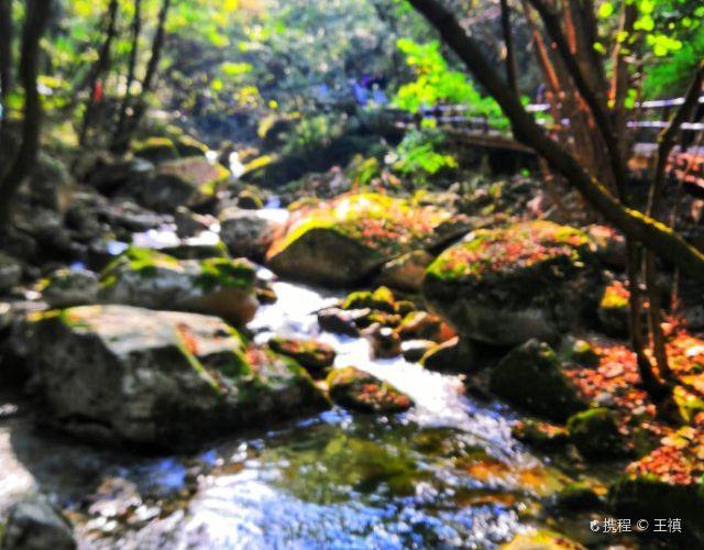 태평국가삼림공원2