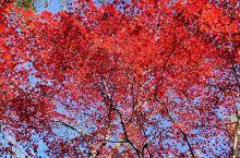 一个东北小妞儿眼中的秋天颜色