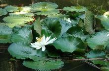 秋日西湖游,莲池花笑荷,却是鱼儿食得欢