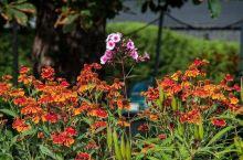 五彩缤纷的花朵温室  圣安德鲁斯被众人所知是因为这里有一所大学是威廉王子与凯特王妃相遇的地方,所以有