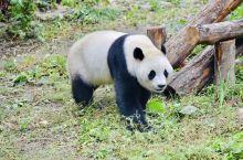 中国最古老的动物园 今年111岁 占地1290亩门票19元