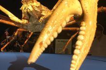 深海生物骨灰粉的必打卡水族馆 到达伊豆的第二天,便直奔骏河湾,这里有儿子念叨了许久的水族馆==骏河湾