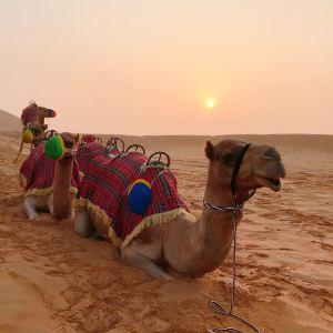 Liwa沙漠之旅旅游景点攻略图