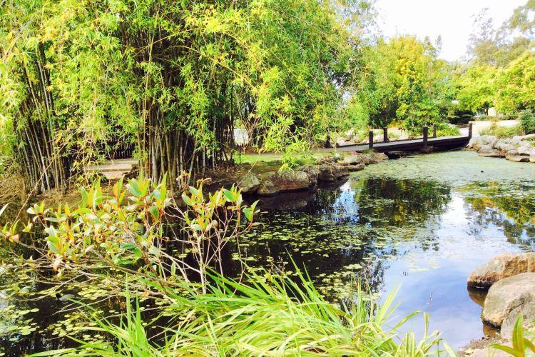 黃金海岸地區植物園