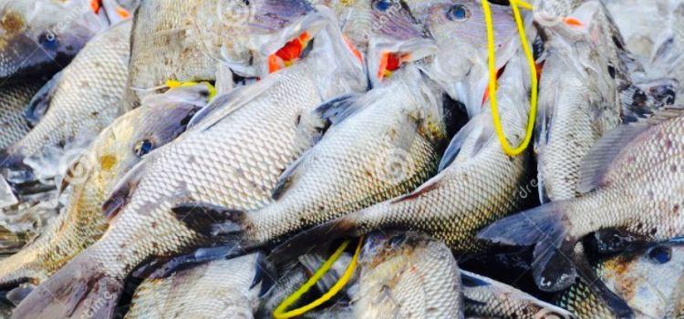 Fresh Catch2