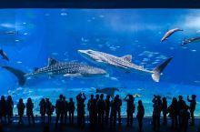 冲绳海洋博物馆