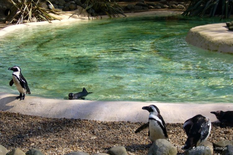 London Zoo4