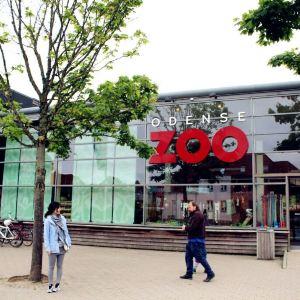 欧登塞动物园旅游景点攻略图