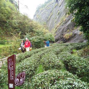 九龙窠旅游景点攻略图