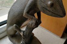 我的宝贝之二:蜥蜴书挡