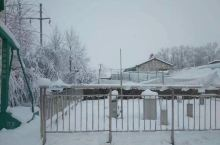 青海门源的雪和可可西里的藏羚羊