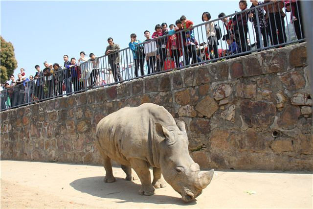 Wuxi Zoo,Taihu Lake Amusement Park3