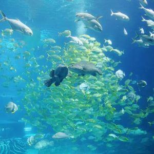 无锡海底世界旅游景点攻略图